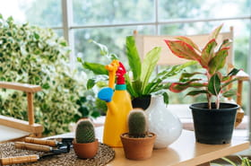 25conseils de pro pour prendre soin de ses plantes d'intérieur