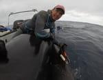 L'invasion des requins-bouledogues