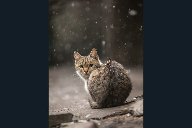 chat sous la neige