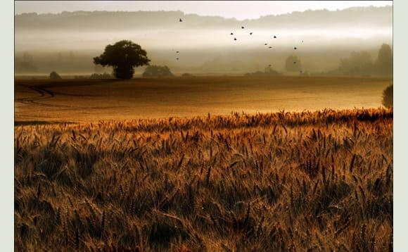 Lumière divine sur un champ de blé