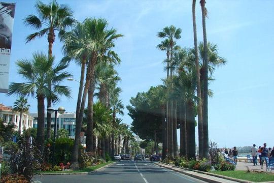 La Croisette à Cannes, promenade mythique