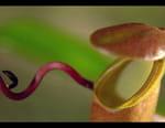 La vie secrète des plantes