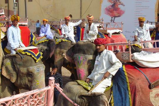 Les conducteurs d'éléphants