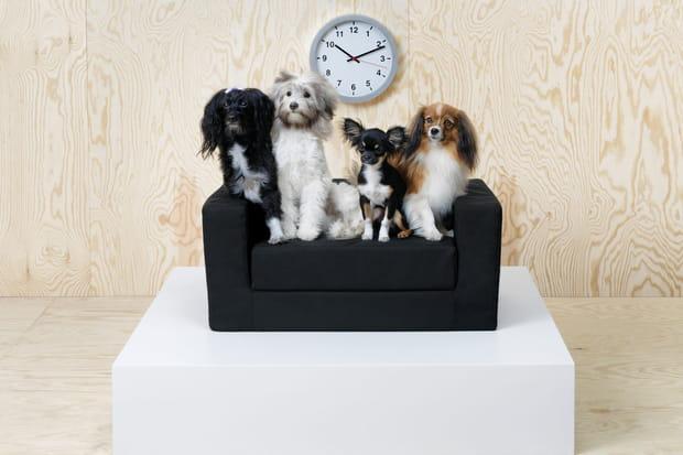 Un canapé pour les animaux