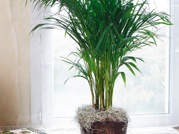 Ces plantes dépolluantes pour votreintérieur