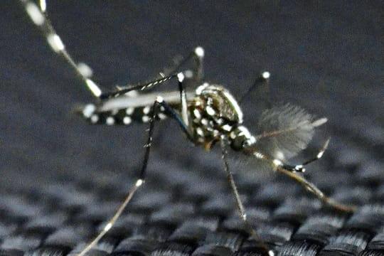 Où le moustique tigre est-il présent? [Carte]