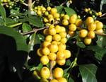 La renaissance du jardin créole aux Antilles