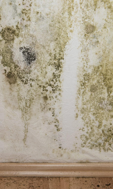 Les champignons dhumidité