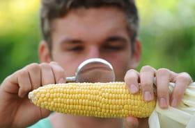 OGM:définition, situation en France et dangers…Le point sur les OGM