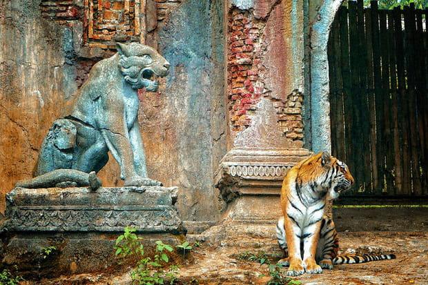 Les tigres de Java