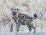 Léopard et hyène : le pacte