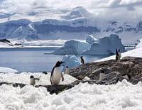 Indonésie sauvage : L'Antarctique sauvage