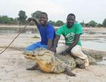 Le crocodile du Nil après l'eden