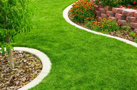 Comment prendre soin de sa pelouse