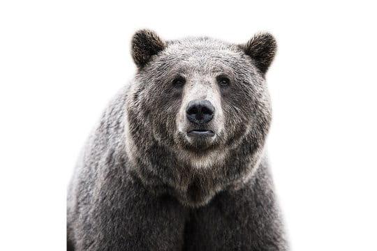 Dans les yeux de l'ours