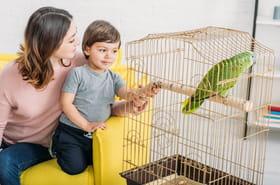 Cage à oiseaux: en bois, en fer ou vintage? Sélection des meilleurs modèles