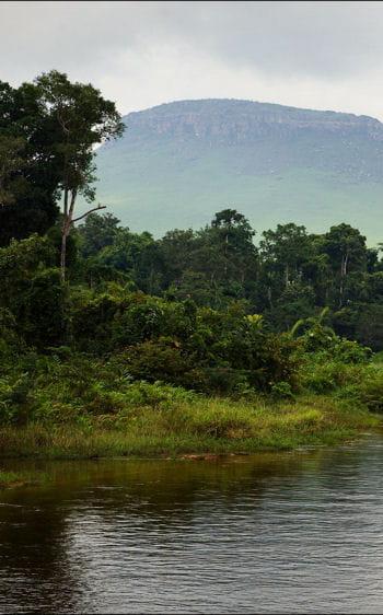 Le Mokele-Mbembe au Congo