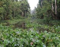 Bornéo : étrange et sauvage