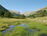 Au coeur des parcs nationaux : Parc national de Mercantour (France)