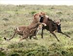 Tanzanie sauvage