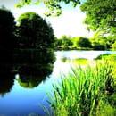Au Moulin  - l'étang -   © moi