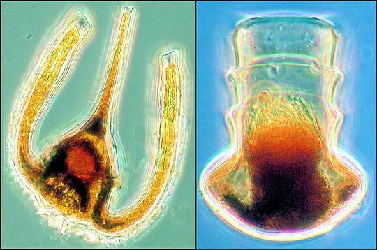 Le paradoxe du plancton