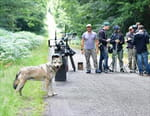L'odyssée du loup : secrets de tournage