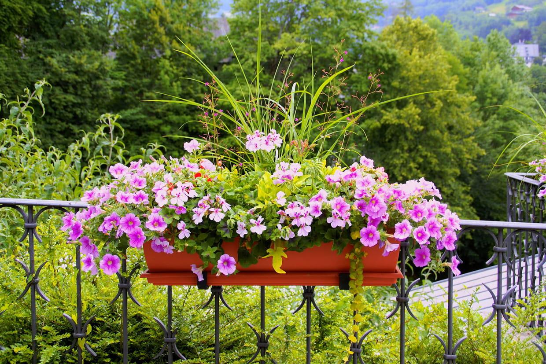 Plante Robuste Pour Terrasse meilleure jardinière : comment bien la choisir, nos suggestions