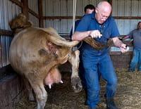 L'incroyable Dr Pol : Les vaches de l'apocalypse