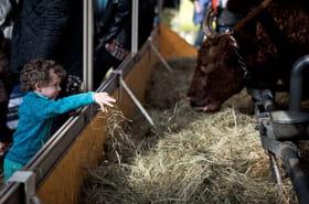 Que faire avec les enfants au Salon de l'Agriculture ?