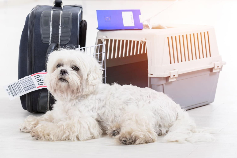 Animal en avion: Conditions, prix... Ce que vous pouvez faire
