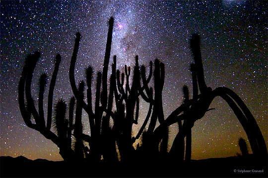 Dans l'ombre des cactus