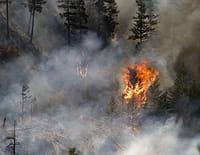 Réparer la nature : Le feu
