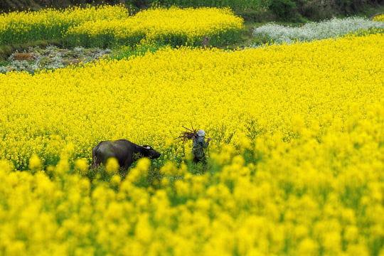 Le Sichuan au printemps