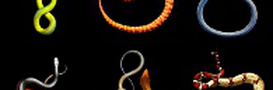 Des serpents de toutes les couleurs