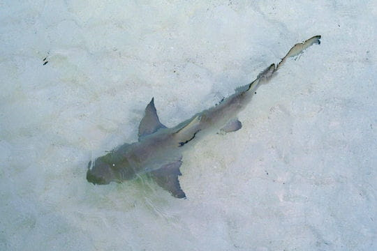 Les requins attendent