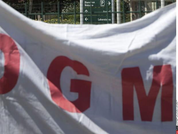 Où se cachent les OGM?