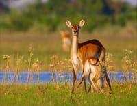 Merveilles d'Afrique : Le delta de l'Okavango