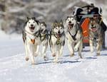 Course de chiens de traîneau - La Grande Odyssée Savoie Mont Blanc