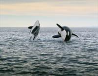 Au coeur des parcs nationaux d'Amérique : Olympic et les Everglades, deux mondes aquatiques