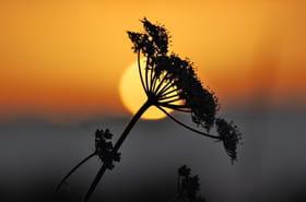 60 magnifiques couchers de soleil