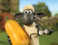 Shaun le mouton : Le documentaire animalier. - Le pélican
