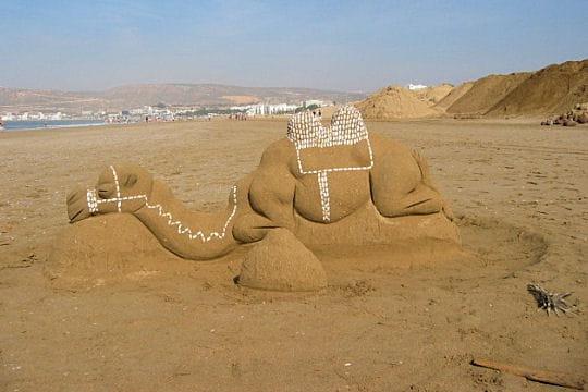 Dromadaire du sable