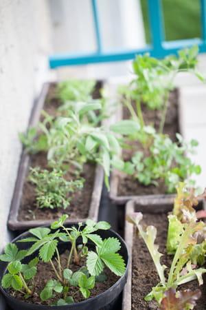 Pots et jardinières sur le balcon