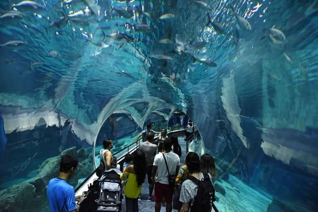 Plongez dans le plus grand aquarium d'Amérique du sud
