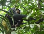 Papouasie, un dernier éden