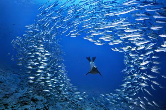 lion de mer des galapagos equateur