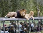 Thoiry : dans les coulisses d'un zoo pas comme les autres