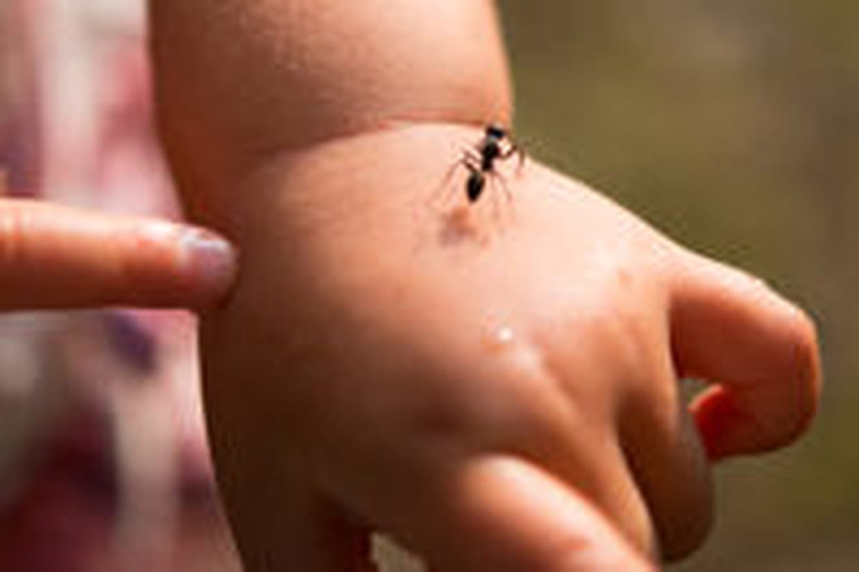 Eloigner Les Fourmis Au Jardin se débarrasser des fourmis : nos astuces anti-fourmi