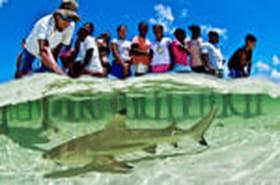 Festival de l'image sous-marine 2009